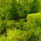 lichen-citron-vert.jpg