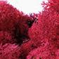 lichen-framboise.jpg
